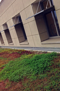 Green roof on the fourth floor of the Lillis Business Complex