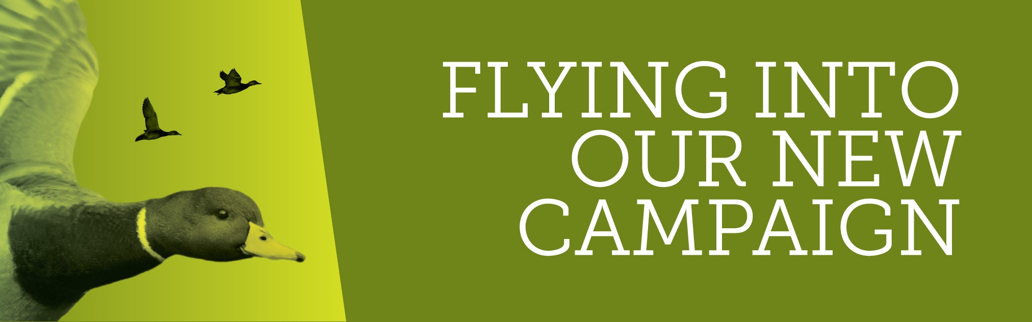 Campaign Takes Flight: Join Us
